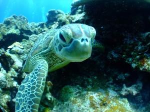 turtle-684348_960_720